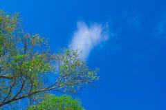 вал верхней части сосенки пущи Стоковое Изображение