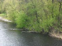 вал весны природы ветви яркий цветя зеленый Стоковые Изображения