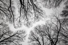 вал ветви мертвый Стоковые Фотографии RF