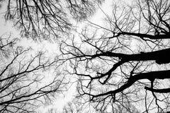 вал ветви мертвый Стоковая Фотография
