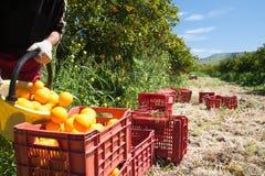 вал времени земной хлебоуборки сада яблока возмужалый Стоковая Фотография RF