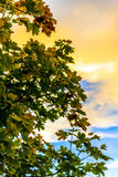 Вал в заходе солнца Стоковое Фото