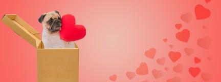 Валентайн дня счастливое s Милая собака мопса в картонной коробке Стоковое Изображение