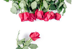 Валентинка розовой флоры цветка счастливая на белой предпосылке Стоковые Изображения