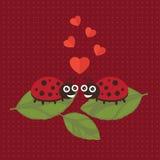 Валентинка Ladybug счастливая Стоковая Фотография