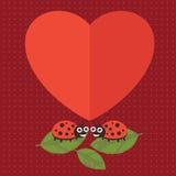 Валентинка Ladybug счастливая Стоковые Изображения