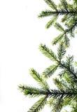 вал ели украшения конца рождества ветви предпосылки вверх по белизне конец вверх белизна изоляции декора рождества Стоковые Фото
