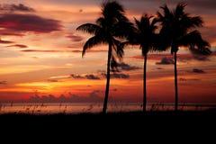 вал захода солнца ладони тропический Стоковые Изображения RF