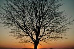 вал захода солнца силуэта Стоковые Изображения RF