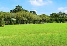 вал зеленого цвета травы Стоковое фото RF