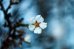 вал листва цветения предпосылки померанцовый Стоковая Фотография