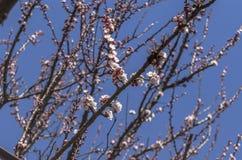 вал листва цветения предпосылки померанцовый Стоковое Изображение
