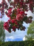 вал листва цветения предпосылки померанцовый Стоковое Изображение RF