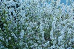 вал листва цветения предпосылки померанцовый Стоковые Изображения RF