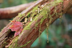 вал листьев расшивы осени Стоковое Фото