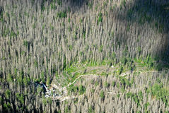 Валить деревья в высоком Tatras Стоковая Фотография