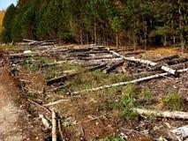 Валить стволы дерева штабелированные в куче Стоковое фото RF