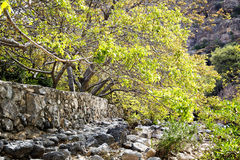 Вади Bani Habib русла реки Стоковые Фото