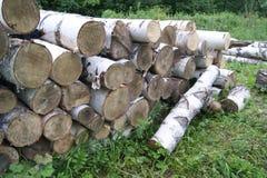 Валка дерева Стоковая Фотография
