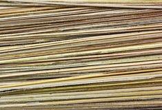 Вал кокоса лист Стоковое Изображение RF