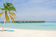 Вал кокоса на пляже Стоковое Изображение RF