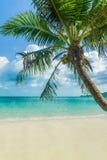вал кокоса пляжа тропический Стоковая Фотография