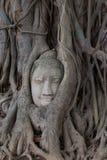 вал корней Будды головной Стоковые Изображения