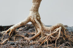 вал корня Стоковые Изображения
