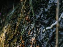 вал корня Стоковая Фотография