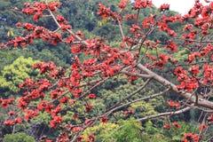 вал красного хлопка цветений silk Стоковые Изображения RF