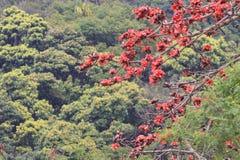 вал красного хлопка цветений silk Стоковые Изображения