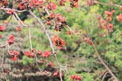 вал красного хлопка цветений silk Стоковая Фотография RF