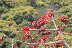 вал красного хлопка цветений silk Стоковые Фото