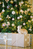 вал кролика рождества вниз Стоковое Изображение