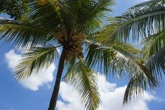 вал Кубы guillermo кокоса cayo Стоковое Изображение
