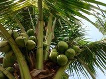 вал Кубы guillermo кокоса cayo Стоковые Изображения RF