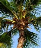 вал Кубы guillermo кокоса cayo Стоковые Фотографии RF