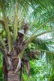 вал Кубы guillermo кокоса cayo стоковая фотография rf