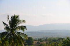 вал Кубы guillermo кокоса cayo Стоковое Изображение RF