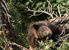 вал медведя младенца стоковые фото