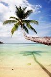 вал моря ладони Стоковое Фото