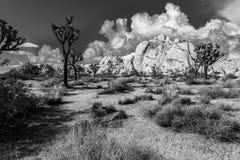 вал национального парка joshua Стоковая Фотография RF