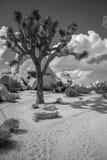 вал национального парка joshua Стоковые Фото