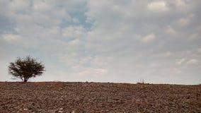 Вал на банке Стоковая Фотография RF