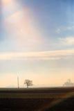 вал на поле Стоковое Изображение