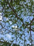 вал неба голубого зеленого цвета Стоковые Фотографии RF