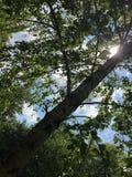 вал озера березы baikal предпосылки Стоковое Фото