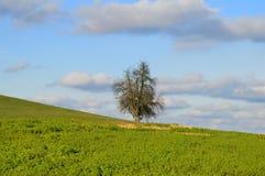 вал поля зеленый одиночный Стоковые Изображения RF