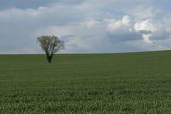вал поля сиротливый Стоковое Изображение RF