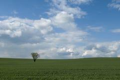 вал поля сиротливый Стоковое Фото
